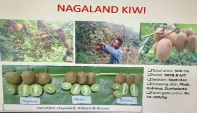 agriculture-ministry-organizes-virtual-meet-on-value-chain-creation-for-kiwi-fruit-english.jpeg