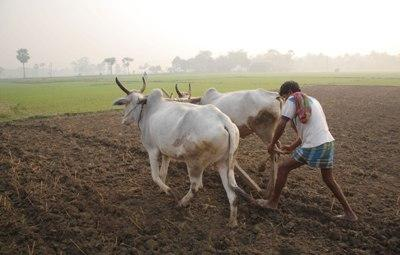 agriculture-scientists-should-develop-techniques-adaptable-to-marginal-farmers-needs-english.jpeg
