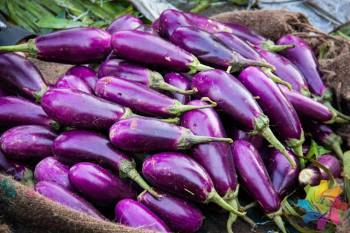 alliance-for-agri-innovation-urges-govt-to-allow-bt-brinjal-trials-in-india-english.jpeg