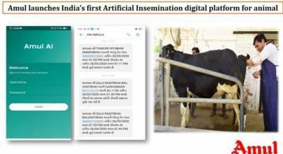amul-initiates-indias-first-digitalization-in-artificial-insemination-english.jpeg