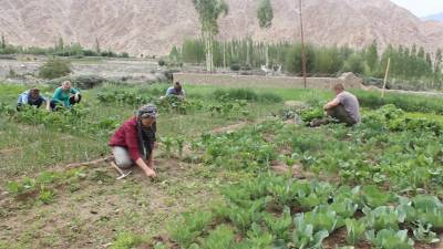 apeda-collaborates-with-ladakh-officials-to-boost-farmers-income-via-unique-agricultural-produce-english.jpeg