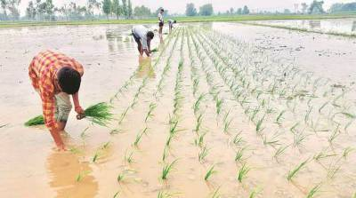 around-59-lakh-ha-more-sowing-area-coverage-reported-under-kharif-crops-in-comparison-to-last-year-marathi.jpeg