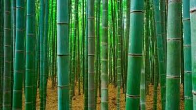 bamboo-markets-has-been-set-up-for-farmers-says-agriculture-minister-english.jpeg