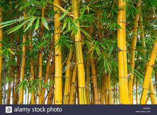 bamboo-to-propel-atmanirbhar-bharat-abhiyan-in-the-north-eastern-region-says-dr-jitendra-singh-english.jpeg