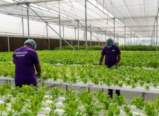 basf-venture-capital-invests-in-indian-hydroponics-firm-urbankisaan-english.jpeg
