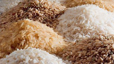 bayer-partners-with-irri-to-advance-technologies-for-direct-seeded-rice-in-asia-english.jpeg