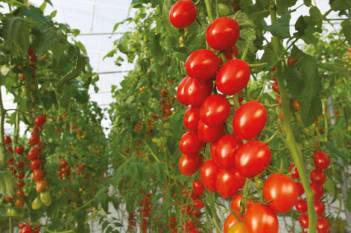 bayer-to-launch-organic-vegetable-seeds-portfolio-enabling-greater-access-to-certified-organic-market-english.jpeg