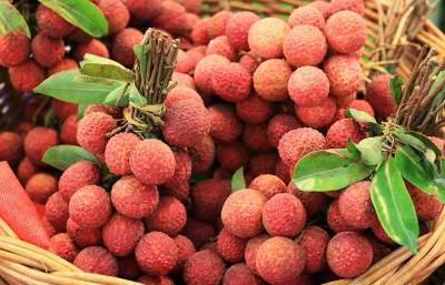 bihar-is-the-top-litchi-producing-state-with-40-share-english.jpeg