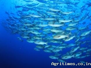 budget-2020-export-target-of-usd-14-bn-set-for-aquaculture-sector-english.jpeg