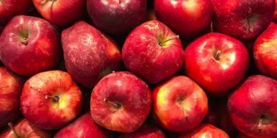 cabinet-approves-inr-2500-crore-for-procuring-apples-under-market-intervention-scheme-in-jandk-marathi.jpeg