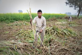 cabinet-approves-inr-3500-cr-assistance-for-sugarcane-farmers-english.jpeg