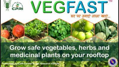 central-coastal-agricultural-research-institute-organises-webinar-to-increase-vegetable-production-in-coastal-areas-english.jpeg