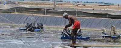 chennai-based-aquaculture-company-launches-direct-to-farmer-aquaconnect-hubs-english.jpeg