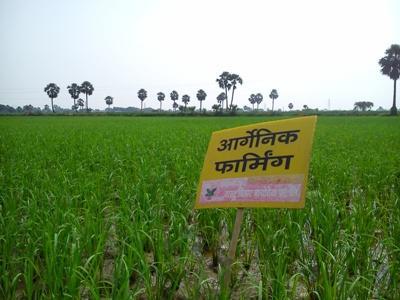 chhattisgarh-to-develop-organic-supermarket-in-bastar-region-english.jpeg