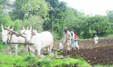 climate-change-likely-to-affect-agricultural-productivity-in-maharashtra-says-institute-for-sustainable-communities-english.jpeg