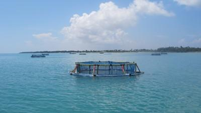 cmfri-draft-national-mariculture-policy-moots-mariculture-zones-in-sea-english.jpeg