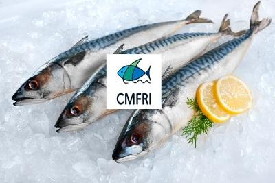 cmfri-launches-project-to-develop-online-platform-for-fish-marketing-english.jpeg