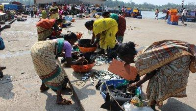 cmfri-study-throws-light-into-unhealthy-financial-practices-in-fisheries-sector-english.jpeg