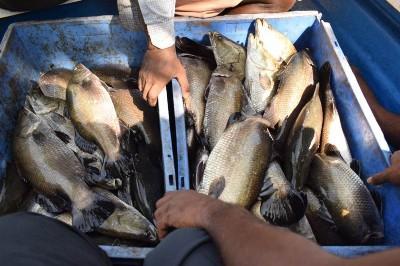 cmfri-to-increase-fish-production-in-kerala-english.jpeg