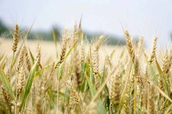 covid19-assocham-calls-for-graded-opening-of-economy-support-to-farm-sector-in-harvest-season-english.jpeg