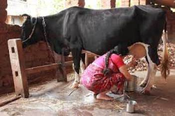 crisil-data-finds-milk-procurement-by-private-dairy-more-in-8-milk-producing-states-english.jpeg