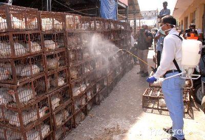 delhi-bird-flu-health-certificate-must-for-poultry-transportation-english.jpeg