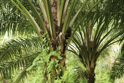 dupont-nutrition-and-health-reaches-100-certified-sustainable-palm-oil-emulsifiers-english.jpeg