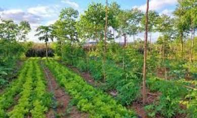 goi-promotes-plantation-of-trees-scheme-for-land-holding-farmers-english.jpeg