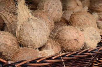 government-increases-msp-of-dehusked-coconut-by-inr-129-per-quintal-for-2020-season-marathi.jpeg