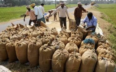 govt-approves-procurement-of-13-77-lmt-of-pulses-oilseeds-for-five-states-including-maharashtra-english.jpeg