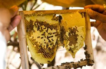 govt-promoting-beekeeping-with-an-aim-to-double-farmers-rsquo-income-says-tomar-english.jpeg