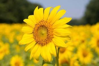 govt-starts-rabi-season-procurement-of-pulses-oilseeds-in-20-states-english.jpeg