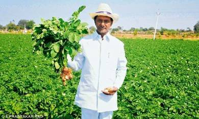grow-what-markets-wants-telangana-cm-directs-farmers-english.jpeg