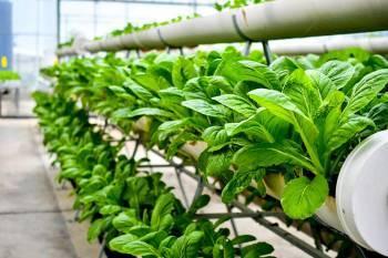 hi-tech-soil-based-vertical-farming-revolutionized-by-a-s-agri-and-aqua-llp-english.jpeg