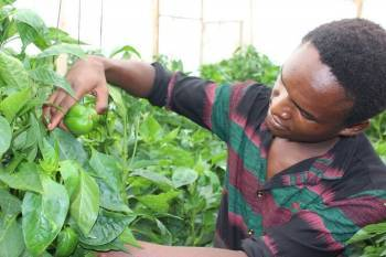 ifad-dispense-funding-to-assist-small-tanzanian-farmers-impacted-by-covid-19-english.jpeg