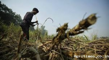 india-announces-more-relaxations-for-agriculture-farming-sector-from-lockdown-english.jpeg