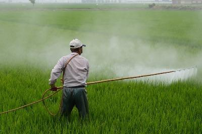 india-consumes-lowest-degree-of-pesticides-in-the-world-english.jpeg