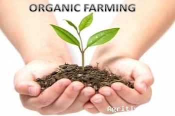 india-exported-inr-5150-crore-worth-of-organic-farming-products-in-2018-19-english.jpeg
