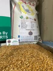 india-exports-gi-certified-bhalia-wheat-to-kenya-sri-lanka-english.jpeg