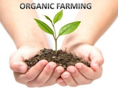 india-offers-assistance-for-organic-farming-english.jpeg