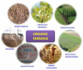 india-progress-in-organic-farming-how-the-government-policies-are-helping-the-sector-to-grow-english.jpeg