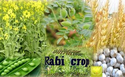 india-rabi-crops-sowing-crosses-60-2-mn-hectares-english.jpeg