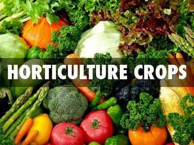 india-release-second-advance-estimates-of-various-horticulture-crops-english.jpeg