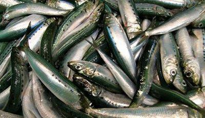 india-rsquo-s-marine-fish-production-down-by-9-sharp-drop-in-oil-sardine-catch-english.jpeg