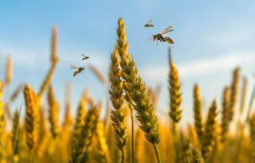 india-rsquo-s-third-advance-estimates-record-growth-of-foodgrains-oilseeds-and-other-commercial-crops-for-2019-20-english.jpeg