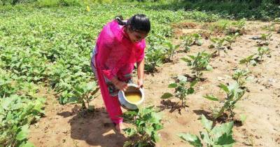 india-to-expand-natural-organic-farming-on-20-lakh-hectares-in-the-next-five-years-says-agri-minister-at-niti-ayog-webinar-english.jpeg
