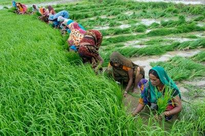 india-to-spend-usd-5-bn-in-agriculture-sector-till-2020-english.jpeg
