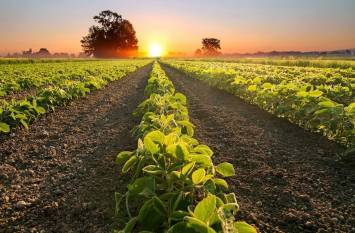 india-using-modern-technology-for-crop-production-forecasting-says-agri-minister-english.jpeg