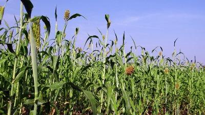 indian-kharif-crop-sowing-touches-101-mn-hectares-english.jpeg
