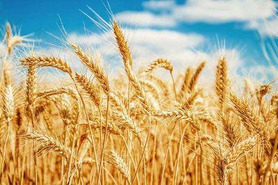indian-rabi-crops-sowing-posted-at-44-22-mn-hectares-english.jpeg